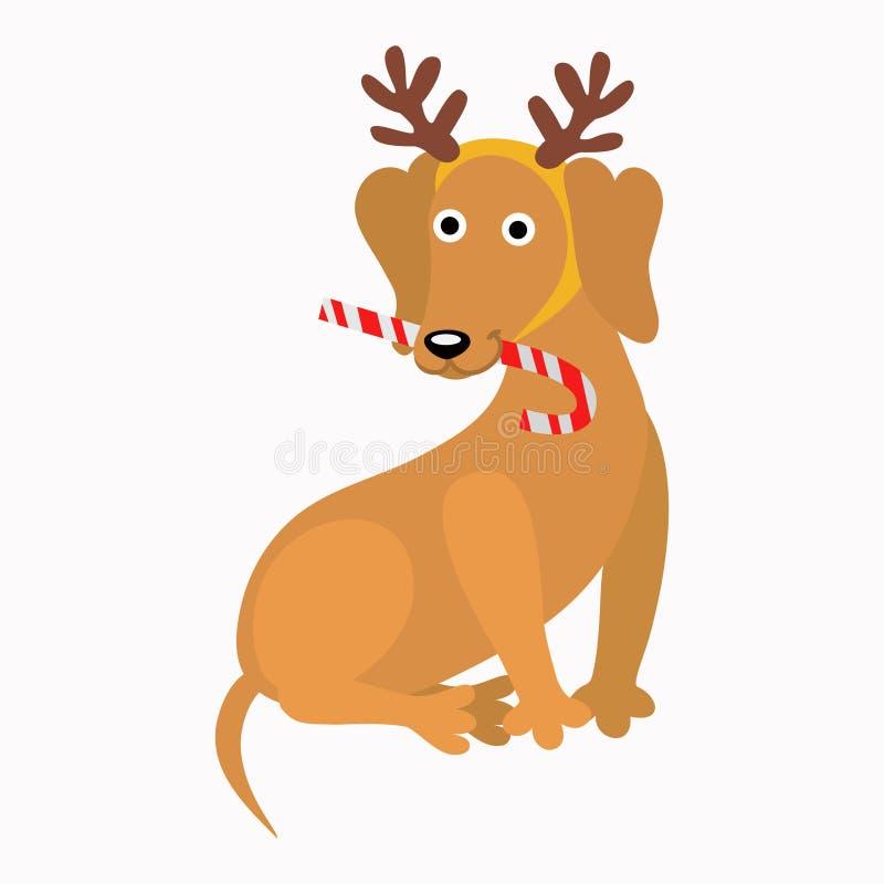 与垫铁新年` s的达克斯猎犬逗人喜爱与糖果微笑 皇族释放例证