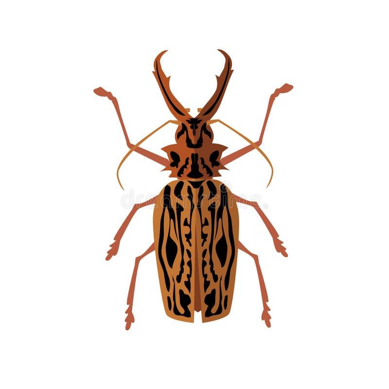 与垫铁的大甲虫鹿 库存例证