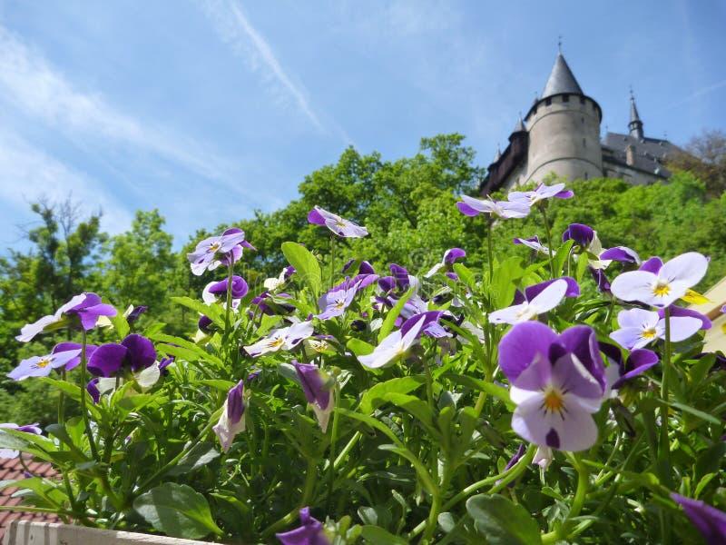 与城堡Karlstejn的盆的五颜六色的花在背景中耸立 库存照片