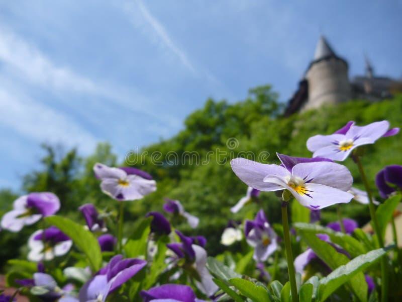 与城堡Karlstejn的盆的五颜六色的花在背景中耸立 免版税库存图片