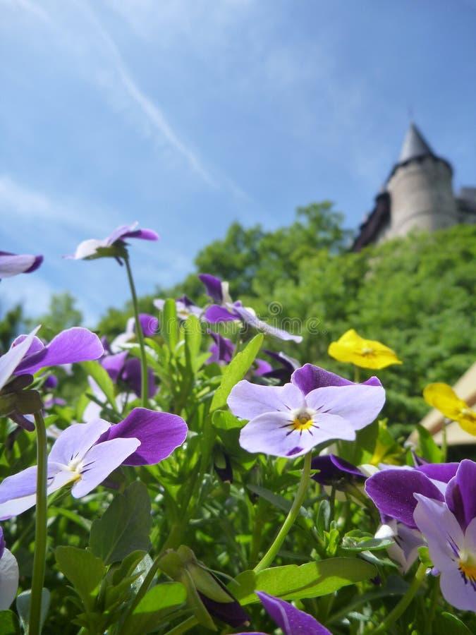 与城堡Karlstejn的盆的五颜六色的花在背景中耸立 库存图片