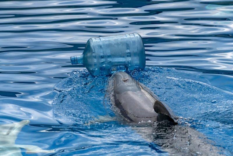 与塑料瓶清洁的海豚海 库存照片