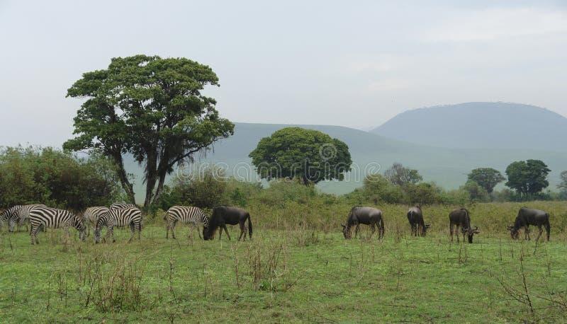 与塞伦盖蒂动物的大草原风景 免版税库存图片