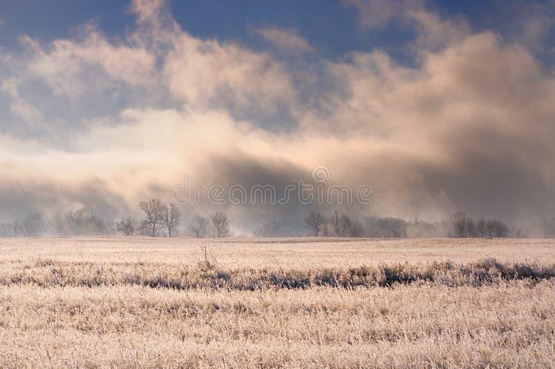 与壮观的大雾的冬天风景在用冻草报道的领域后的光秃的树上在天空蔚蓝下在日出期间 库存图片