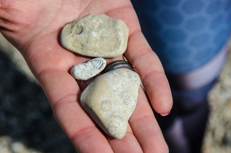 与壳版本记录的石头  免版税图库摄影