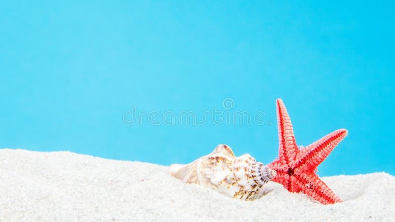 与壳的沙子海滩 图库摄影