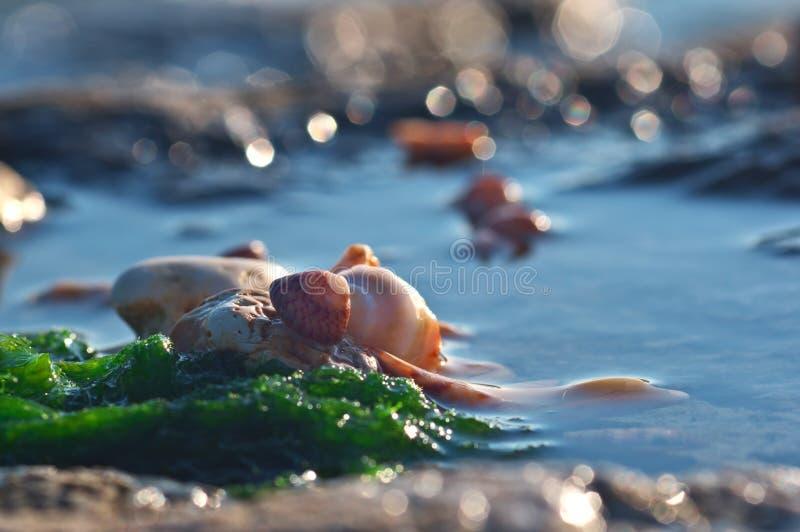 与壳的海洋静物画 库存图片