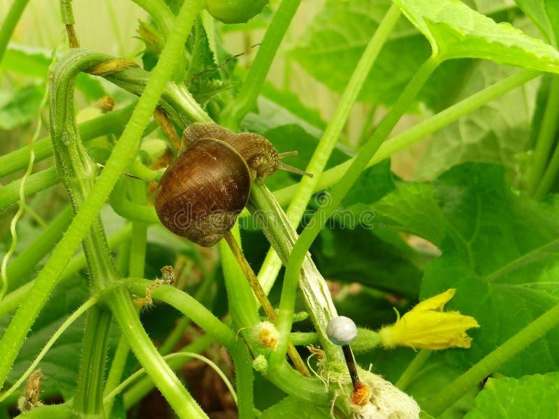 与壳的蜗牛在绿色词根的沙子 图库摄影