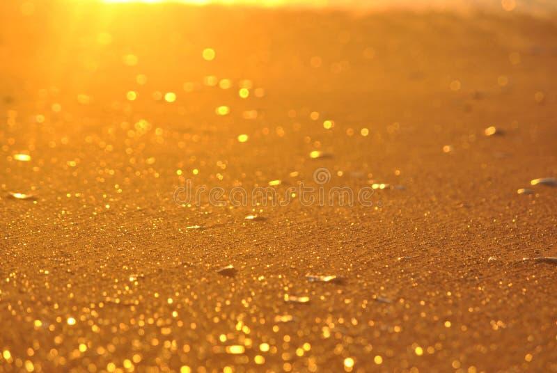 与壳的金黄沙子 免版税图库摄影