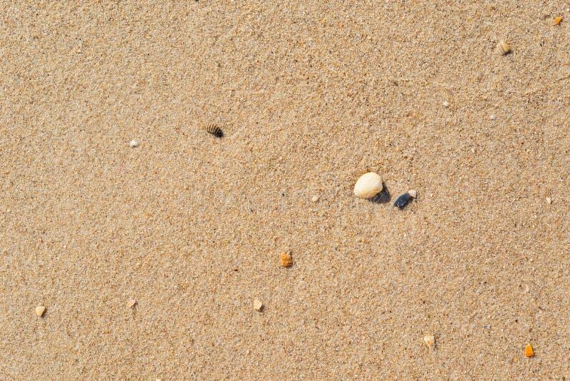 与壳的黄沙特写镜头作为背景或纹理 免版税库存图片