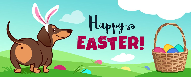 与复活节兔子耳朵的逗人喜爱的达克斯猎犬狗在草,篮子充分坐糖果鸡蛋,在草掩藏的鸡蛋,传染媒介动画片 库存例证