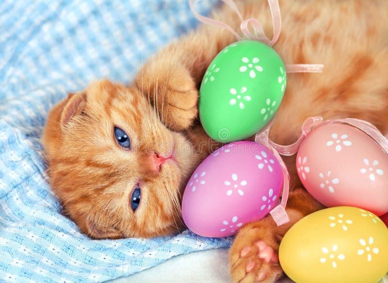 与复活节的红色小猫上色了鸡蛋 库存照片