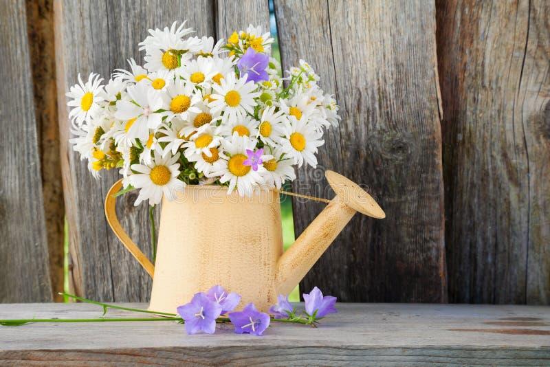 与夏天雏菊的喷壶在木背景开花 免版税库存图片