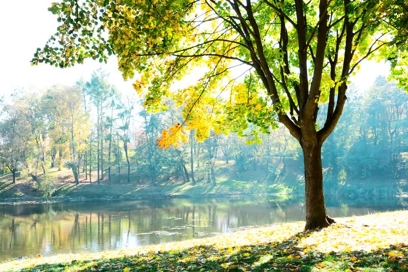 与多彩多姿的叶子的秋天树有看法向湖 从槭树叶子的阳光在好日子 免版税库存照片