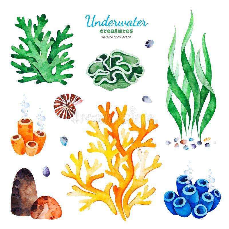 与多彩多姿的珊瑚礁、贝壳和海草的水彩汇集 库存例证