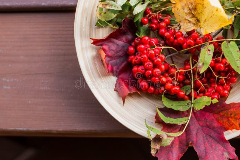 与多彩多姿的秋叶和莓果的分支 仍然秋天生活 秋叶和莓果花束  花揪 免版税库存图片