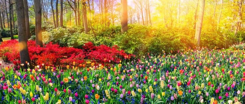 与多色春天花的全景风景 自然backg 免版税库存照片