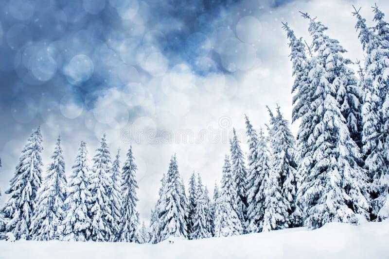 与多雪的冷杉木和bokeh光的圣诞节背景 免版税图库摄影