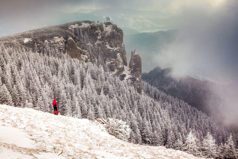 与多雪的冷杉木的冬天风景在山 免版税库存照片