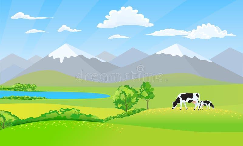 与多雪的山峰山和草甸领域的美好的自然风景 在草的黑白母牛 皇族释放例证