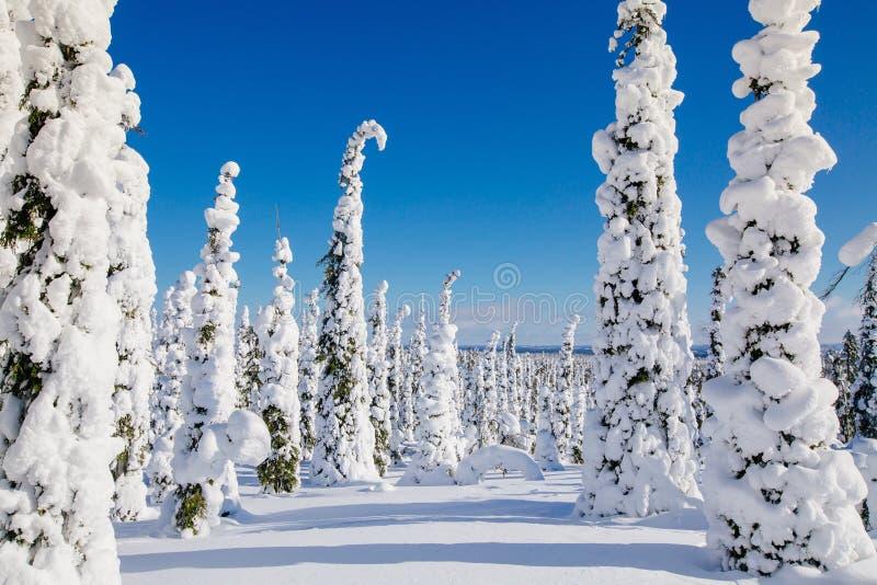 与多雪的树的美好的冬天风景在拉普兰,芬兰 森林冻结的冬天 库存图片