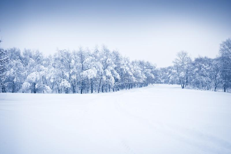 与多雪的被盖的树和剧烈的天空的冬天降雪的季节森林风景在蓝色颜色 免版税库存照片