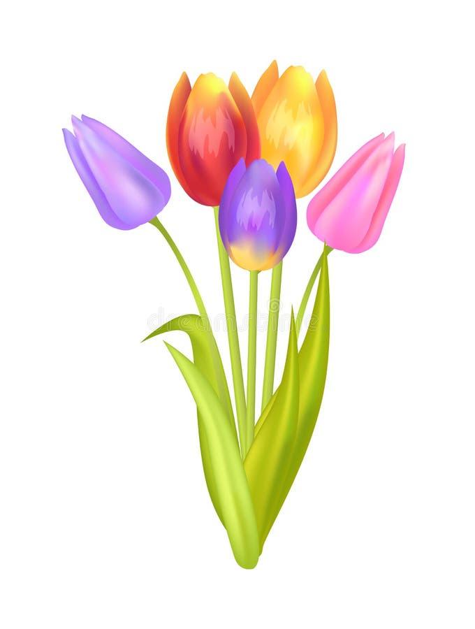 与多颜色三郁金香的五颜六色的花束  库存例证