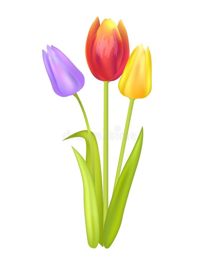 与多颜色三郁金香的五颜六色的花束  皇族释放例证