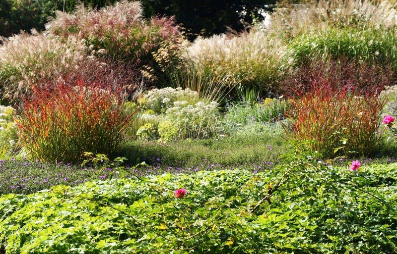 与多年生植物和装饰草的庭院床 免版税库存图片