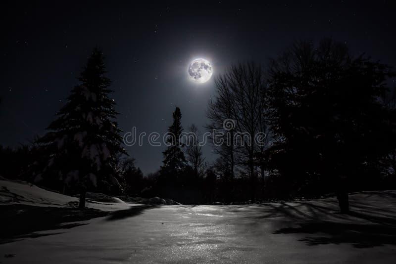 与夜月亮的林木线 图库摄影