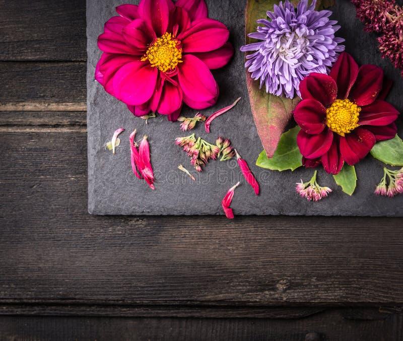 与大丽花的花的布置在黑暗的桌,背景上 库存照片