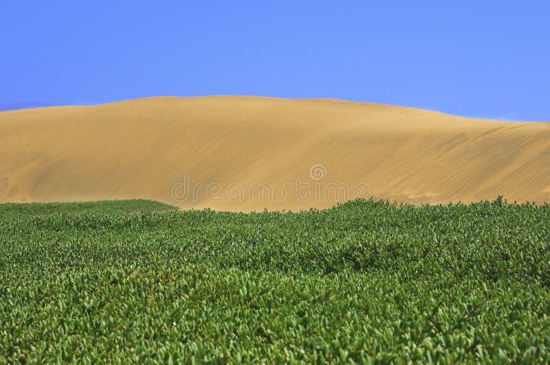Download 与大加那利岛, Canarian海岛沙丘的美好的风景 库存照片. 图片 包括有 旅行, 浪费, 土坎, 荒芜 - 62538136