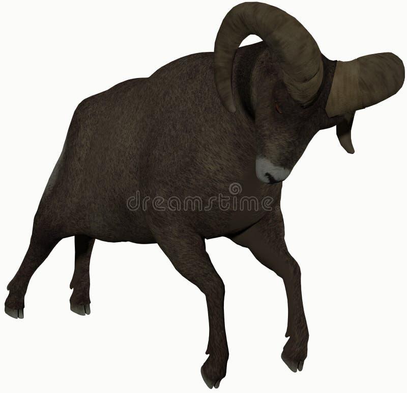 与大垫铁的一只公羊 免版税库存照片