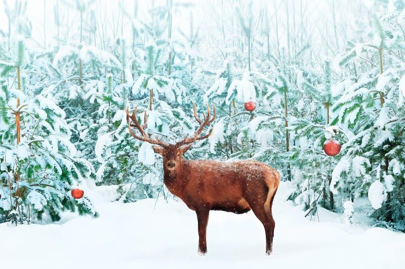 与大垫铁的美丽的高尚的雷德迪尔男性和与装饰的圣诞树在雪在欢乐冬天森林里 库存图片
