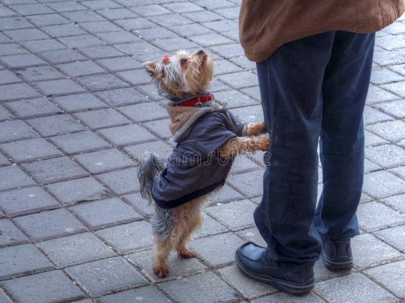 女人与狗兽交网站_beautifuler, 人兽交, 交配动物者, 似犬, 伴随, 逗人喜爱, 狗, 小狗