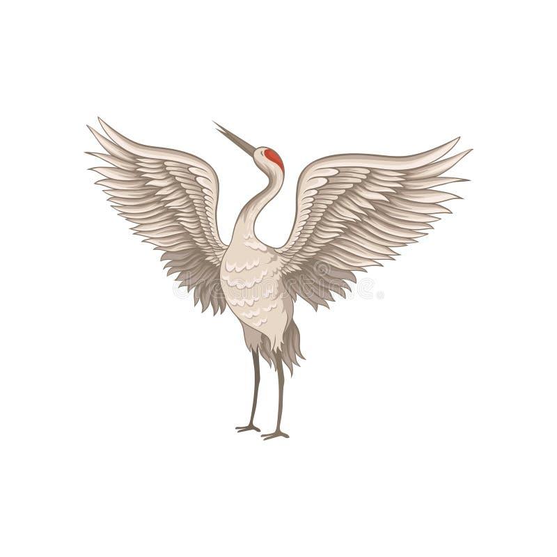 与大开翼的红被加冠的起重机身分 与长的稀薄的额嘴、腿和脖子的优美的鸟 平的传染媒介 向量例证