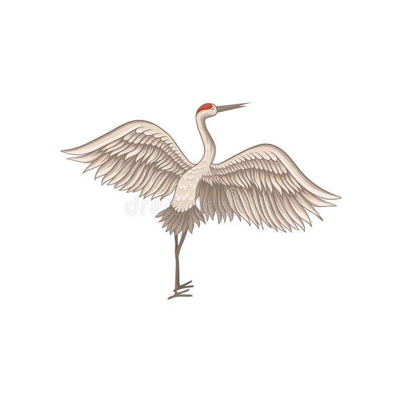 与大开翼的红被加冠的起重机身分 与长的稀薄的额嘴、腿和脖子的野生鸟 平的传染媒介设计 向量例证