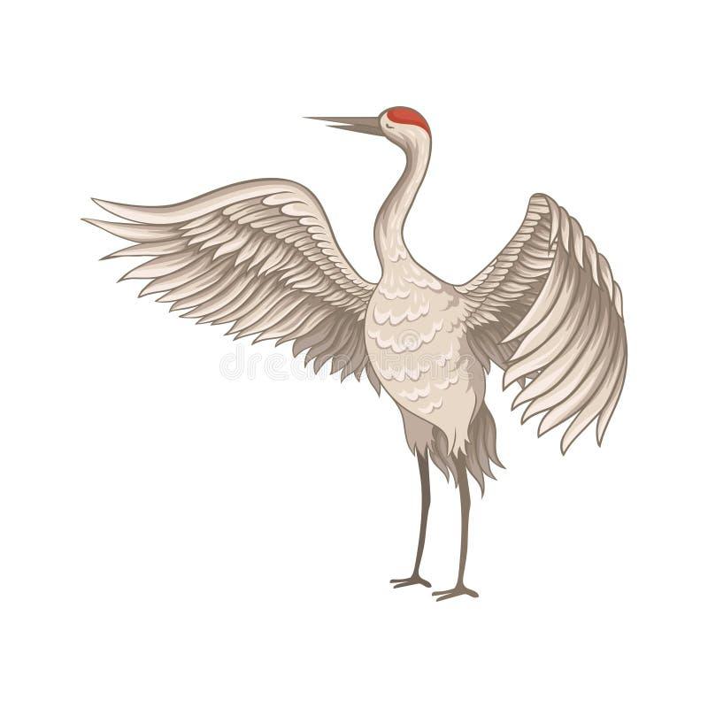 与大开翼的红被加冠的起重机身分 与长的稀薄的额嘴、腿和脖子的鸟 平的传染媒介设计 向量例证