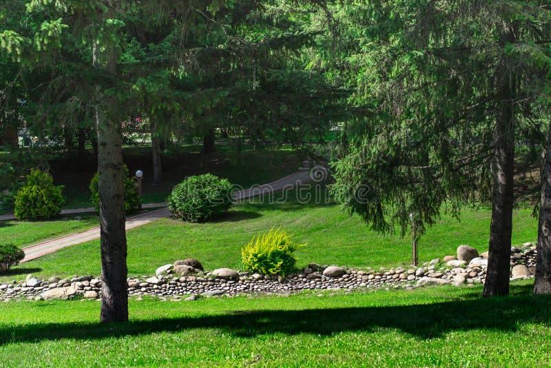 与大树干的落叶松属在公园 风景设计观念 图库摄影