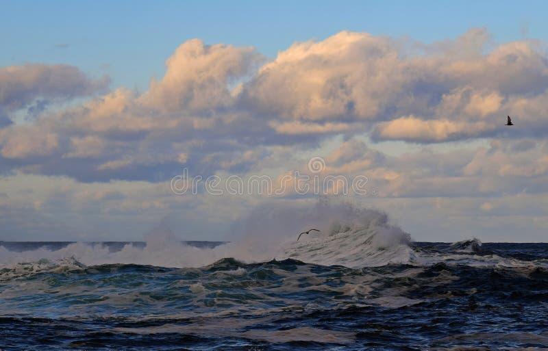 与大波浪的海景在黄昏 免版税库存图片