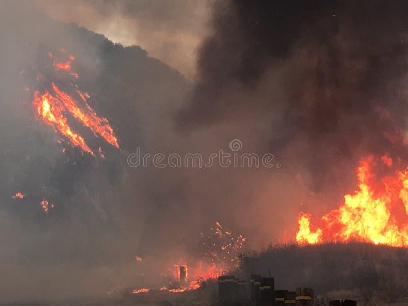 与大火焰的森林火灾 免版税库存照片