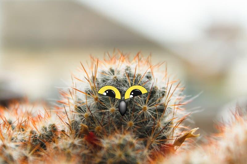 与大眼睛的逗人喜爱的猫头鹰与眼睛的小鸡,仙人掌和额嘴拼贴画 免版税库存照片