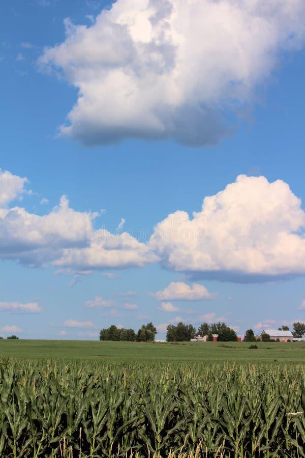 与大积云的麦地和距离的一个农场 免版税库存图片