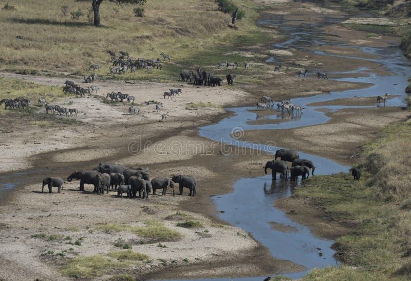 与大象和斑马的非洲风景视图 库存图片