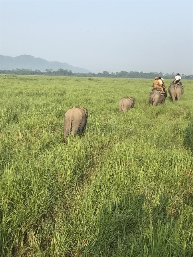 与大象的自然方式 免版税图库摄影