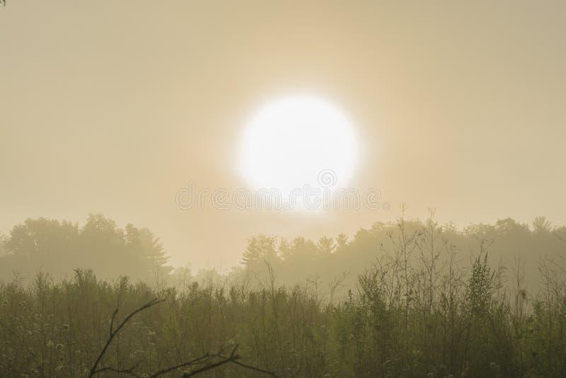 Download 与大雾的日出 库存照片. 图片 包括有 没人, 人们, 森林, 阳光, 本质, 晒裂, 剪影, 结算, 黎明 - 59112774