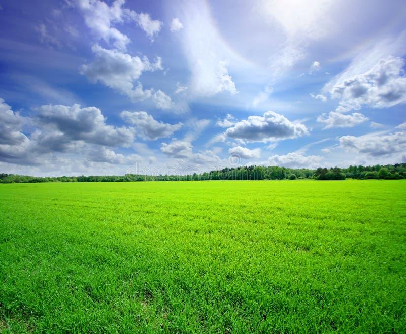 与天空和草的一个美好的本质背景 免版税库存照片