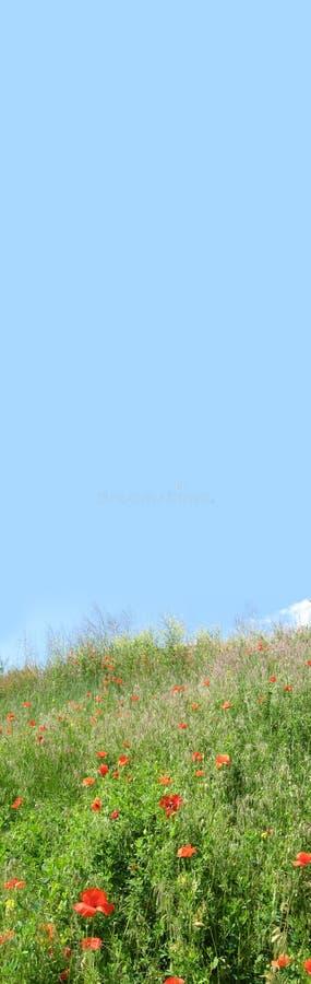 与天空蔚蓝和红色鸦片的花卉横幅在一个绿色草甸 库存照片