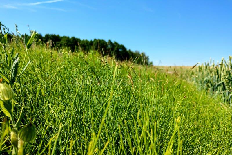 与天空蔚蓝在一清楚的好日子,自然背景的绿色领域 库存图片