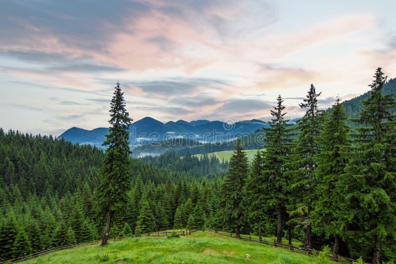 与天空蔚蓝的史诗山风景和松树和雾 库存图片
